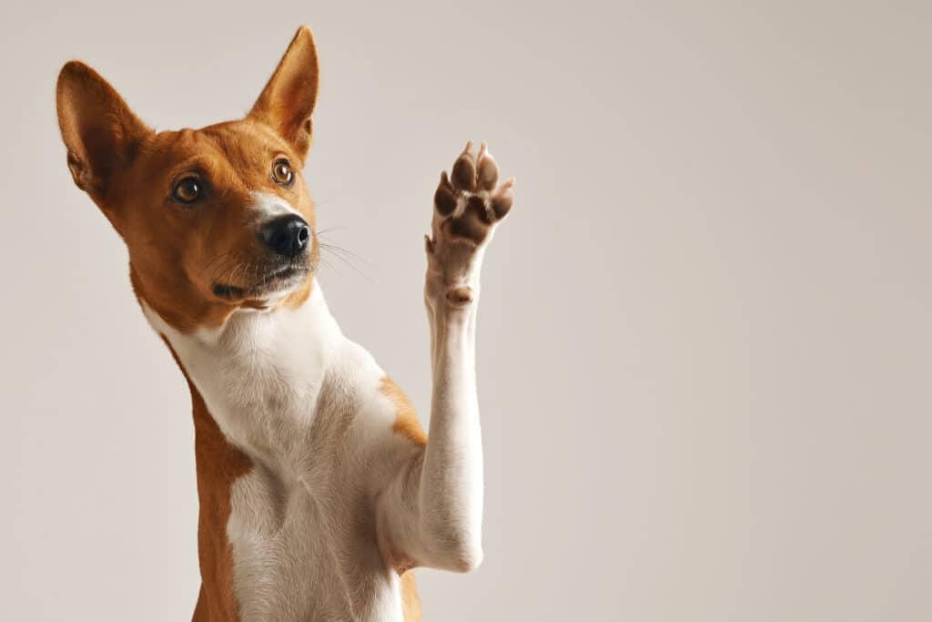 Neoplasia em animais é o nome que se dá a um grupo de células anormais alteradas geneticamente e que o corpo não consegue impedir o seu crescimento. A palavra tumor é sinônimo de Neoplasia, já a palavra câncer se refere aos tumores malignos.